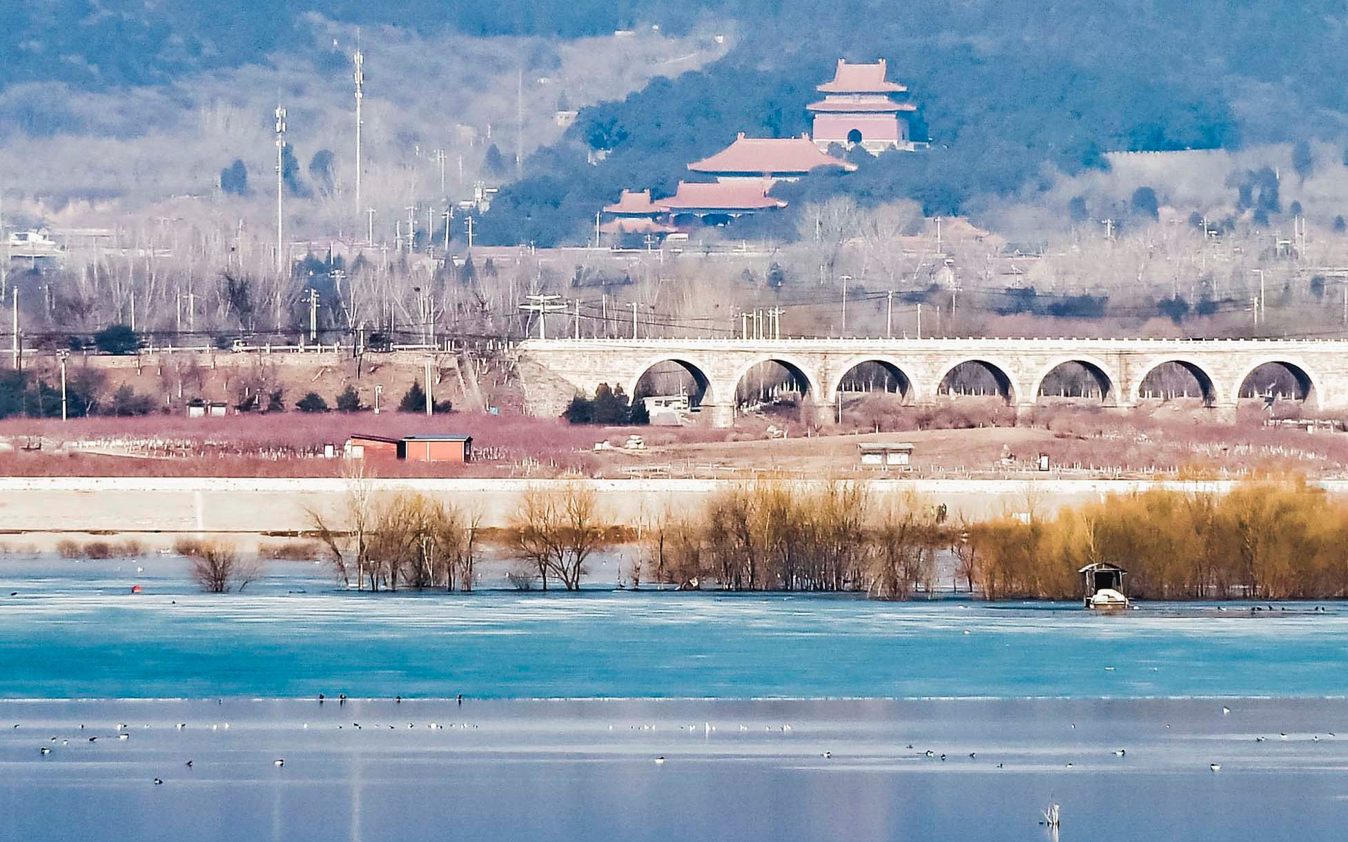 候鸟先头部队到北京 昌平十三陵水库成中途补给站图片