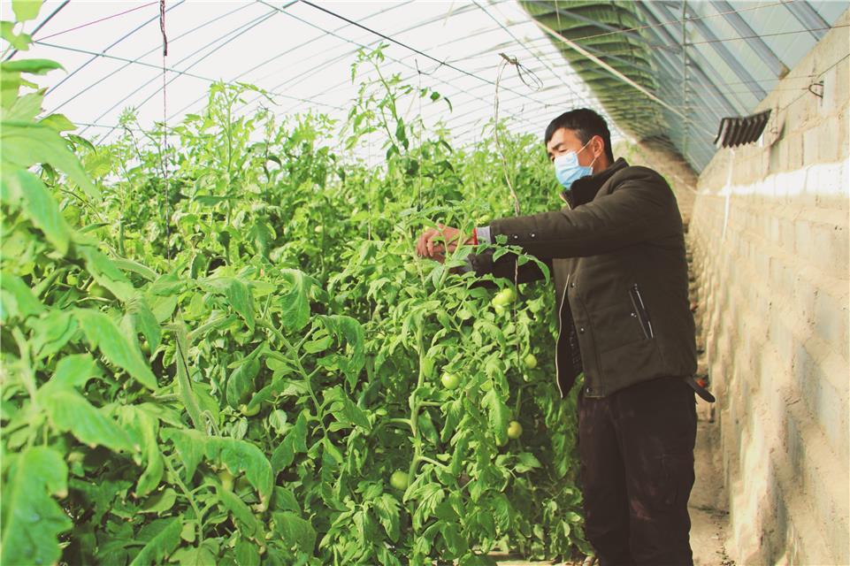 """甘肃瓜州:发展""""五小产业"""" 拓宽增收渠道"""