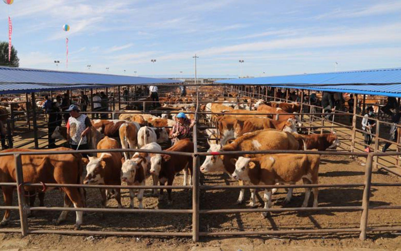 京蒙成峰牲畜交易市场扶贫项目带动科左中旗就业一万余人图片