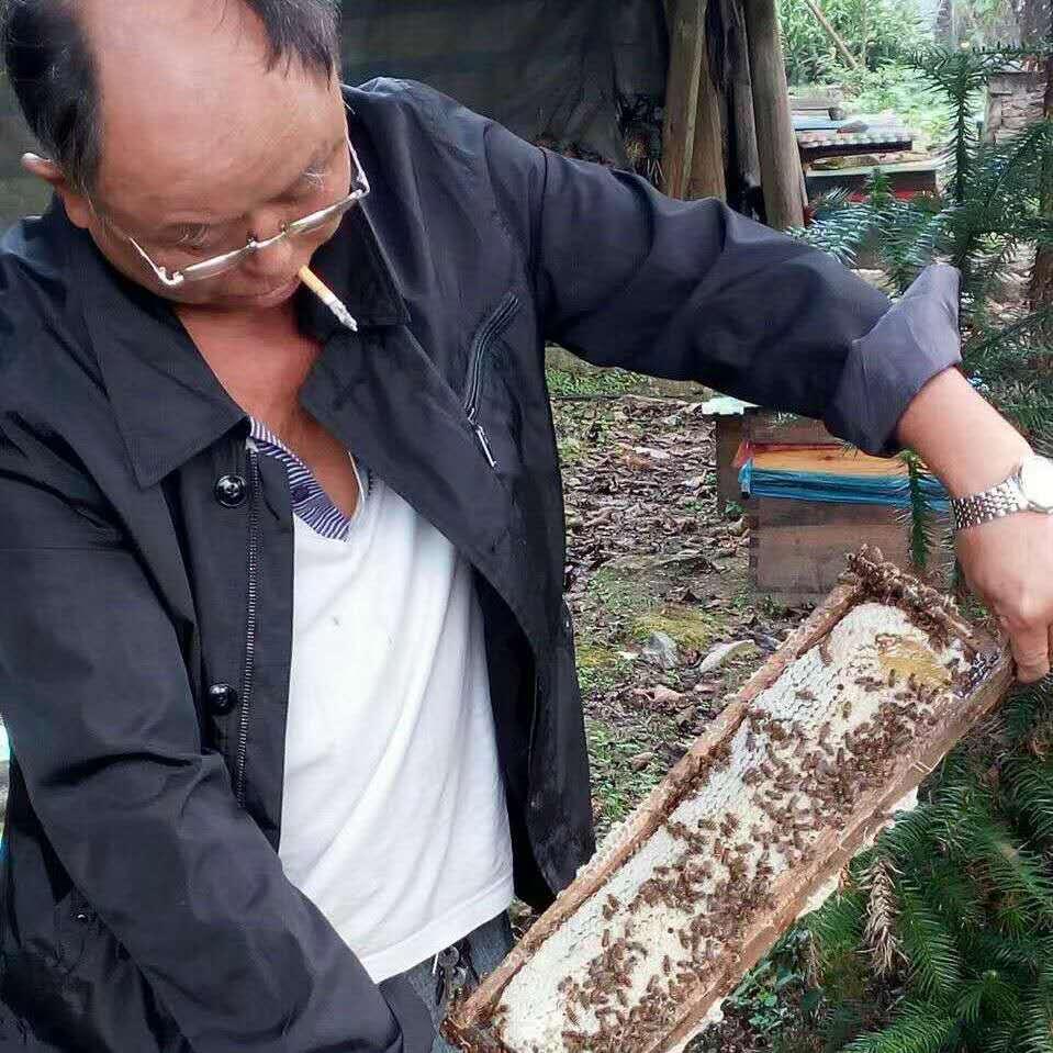 「恒行」下无法追花夺蜜的蜂农今恒行年谁来给油菜图片