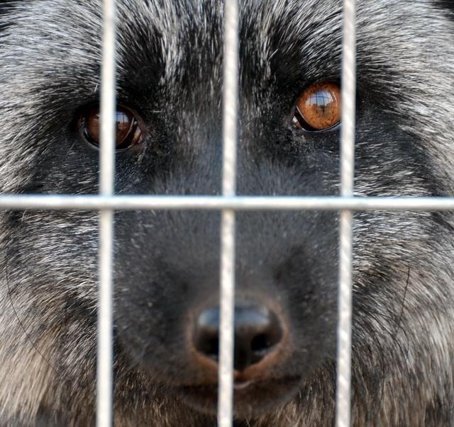 这些陆生野生动物不能再吃,吃了就违法!图片
