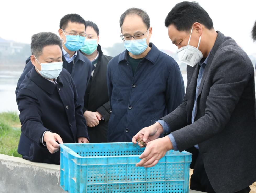 蔡亭英调研望城区荷花虾产业复工复产情况