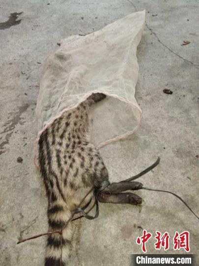 猎杀野生动物两男子被三亚警方刑事拘留