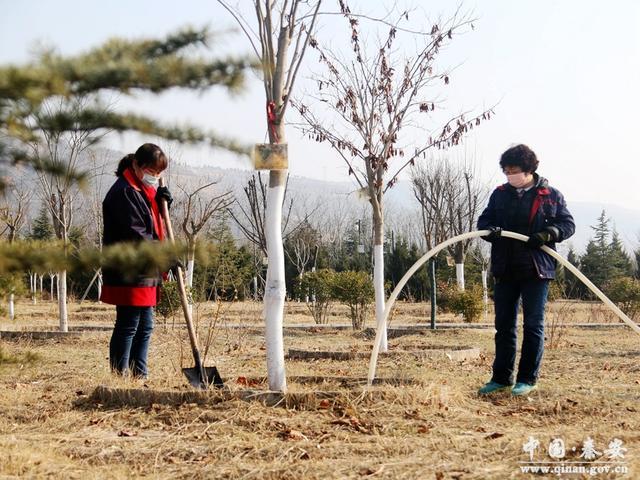 秦安凤山景区:积极为苗木进行春季浇水