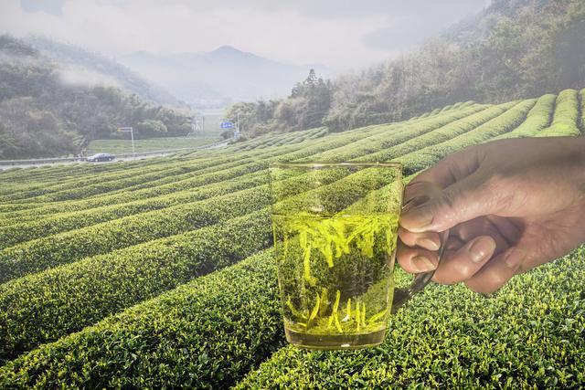喝茶可抑制冠状病毒?浙江疾控:非鼓励抢购茶叶