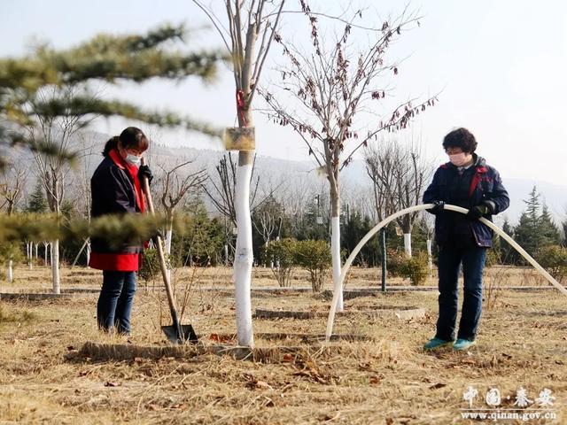 凤山景区积极为苗木进行春季浇水