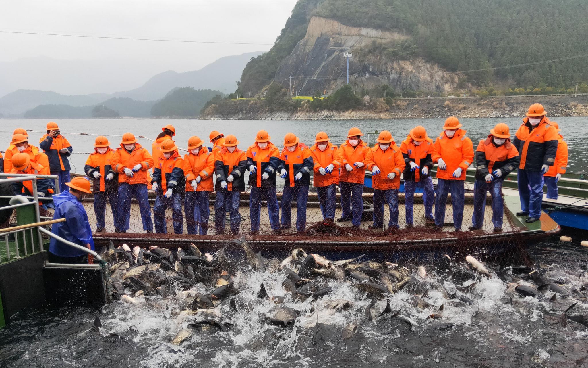 """千岛湖新春""""第一网""""收鱼5万斤 收入所得将捐抗疫一线图片"""