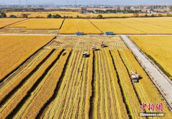 2020年稻谷最低收购价公布:粳稻每50公斤130元