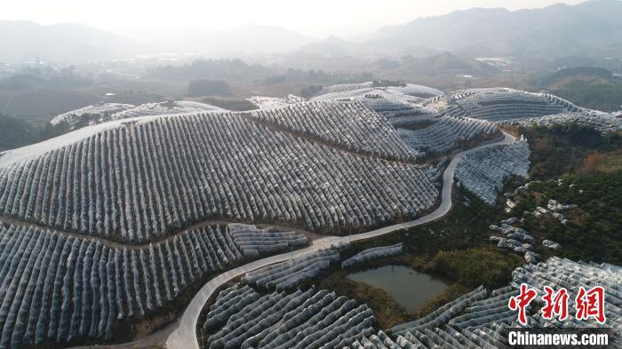 广西连续20年实现耕地占补平衡