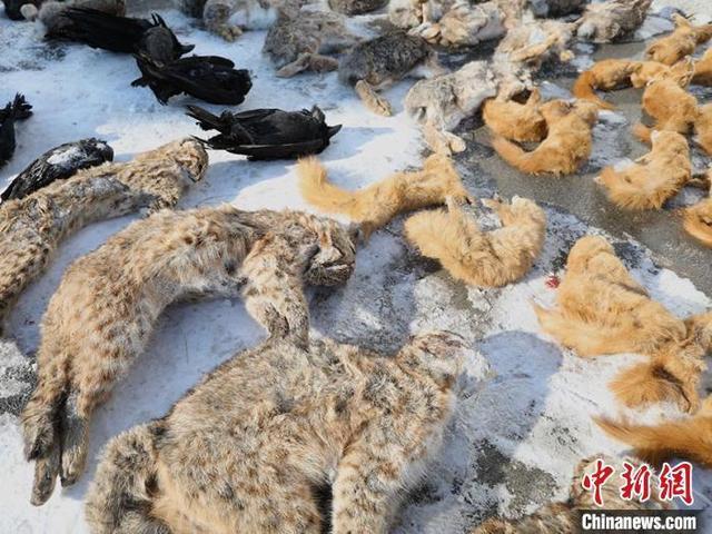 """吉林省破获破坏野生动物资源案20起 严查""""野味上餐桌"""""""