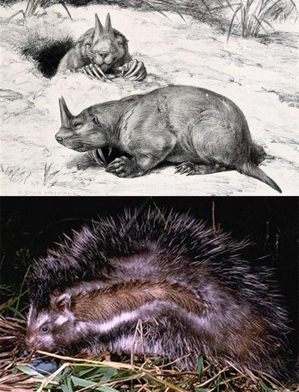 为什么说人类灭绝了老鼠也不会灭绝?