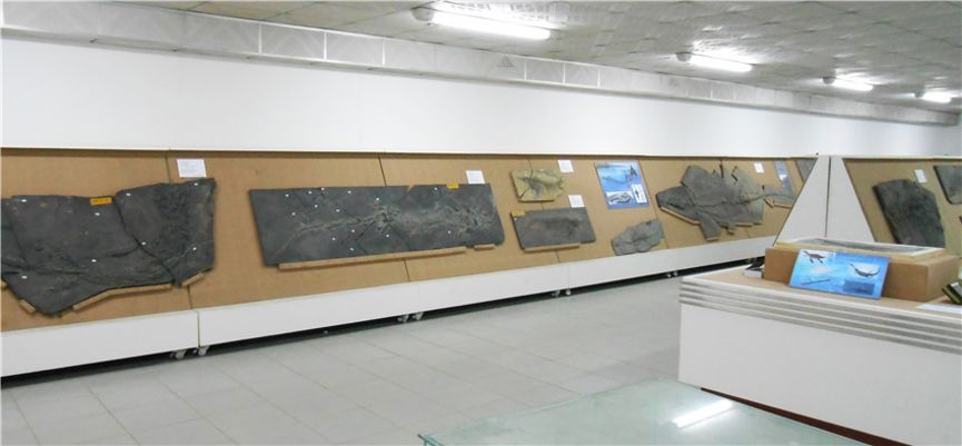 北大地质博物馆网站改版,3D全景展示邀你在线体验图片