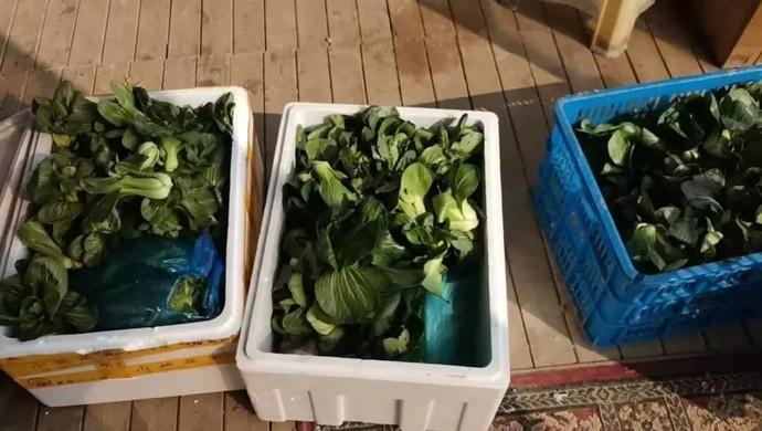 为隔离在家的人配菜,上海这位农场主免费送出了300多公斤蔬菜和10余只草鸡图片