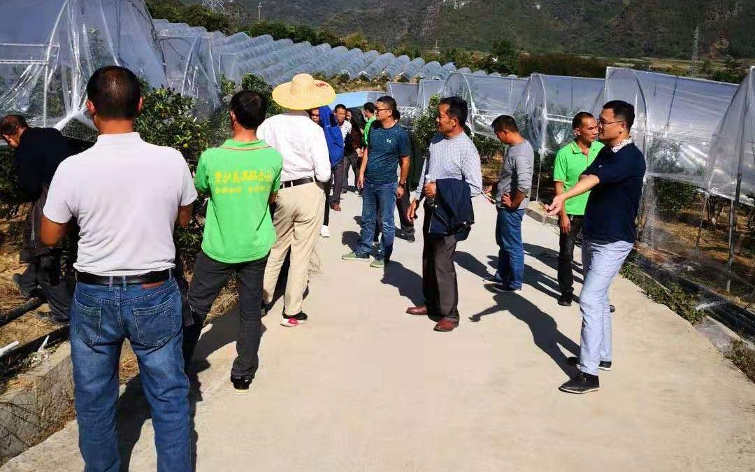 农民组织读一号文件:小农户融入产业链重点在政策落实图片