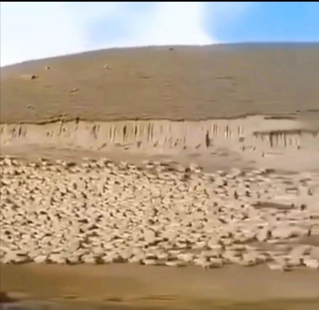 [蓝冠]除了3万只羊蓝冠蒙古国还送过啥礼物图片