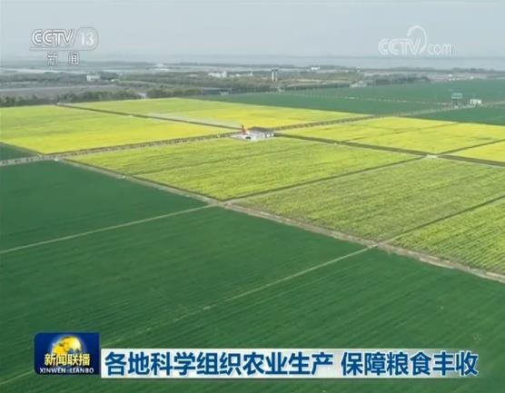 各地科学组织农业生产 保障粮食丰收图片