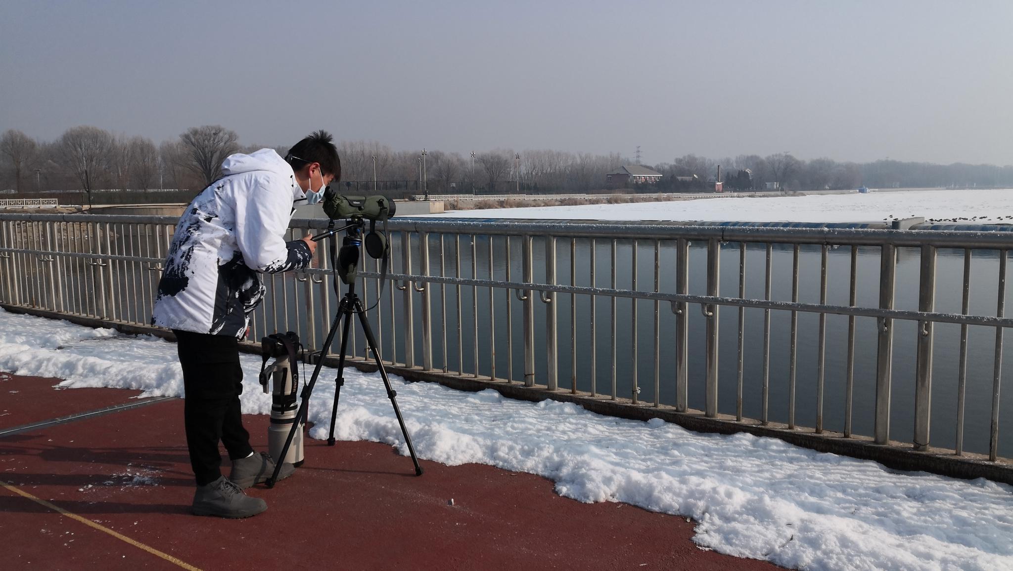 北京加强迁徙候鸟等野生动物监测,如有异常将现场处置图片