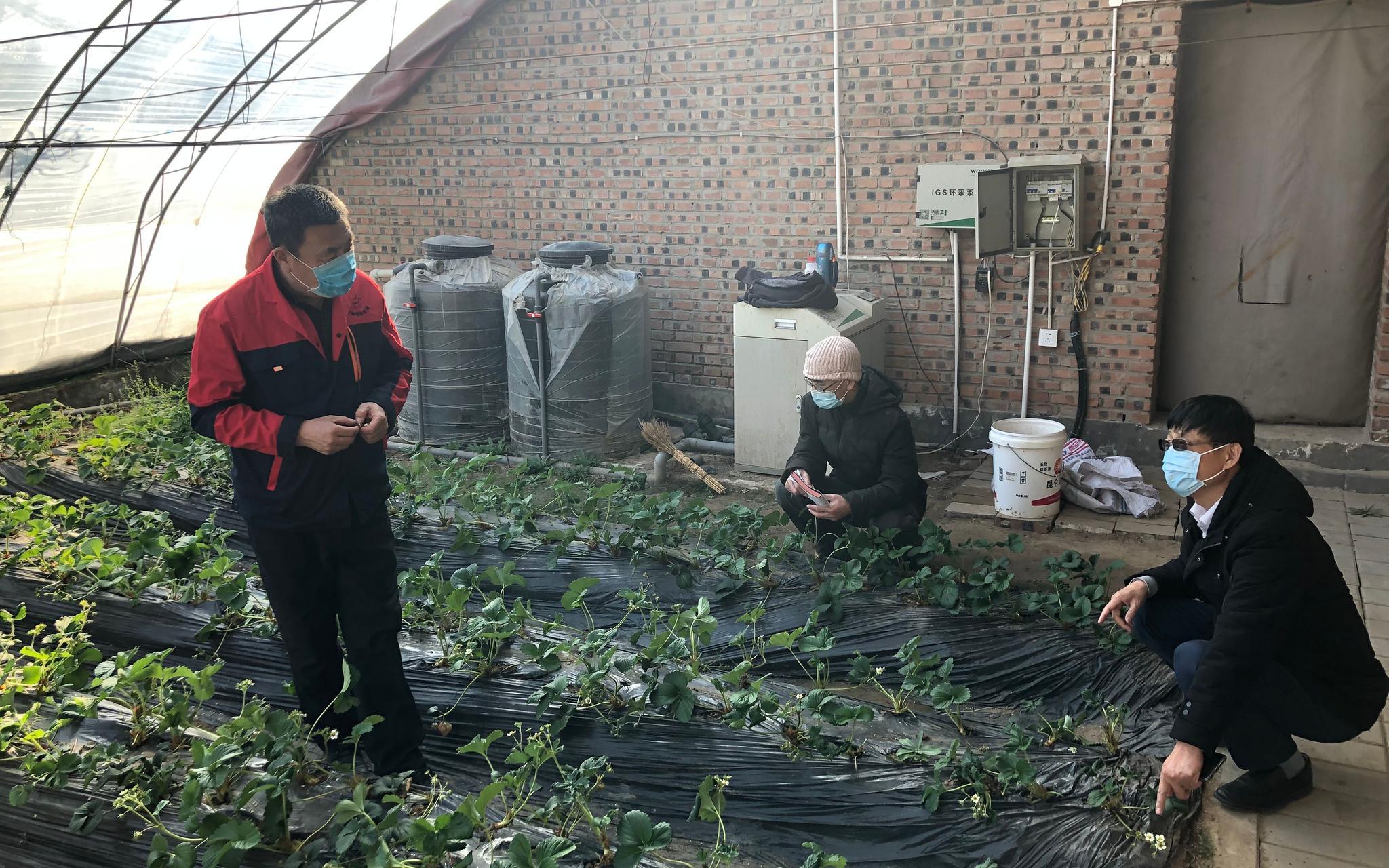 防疫不误农时,北京派技术专家到地头指导春耕图片