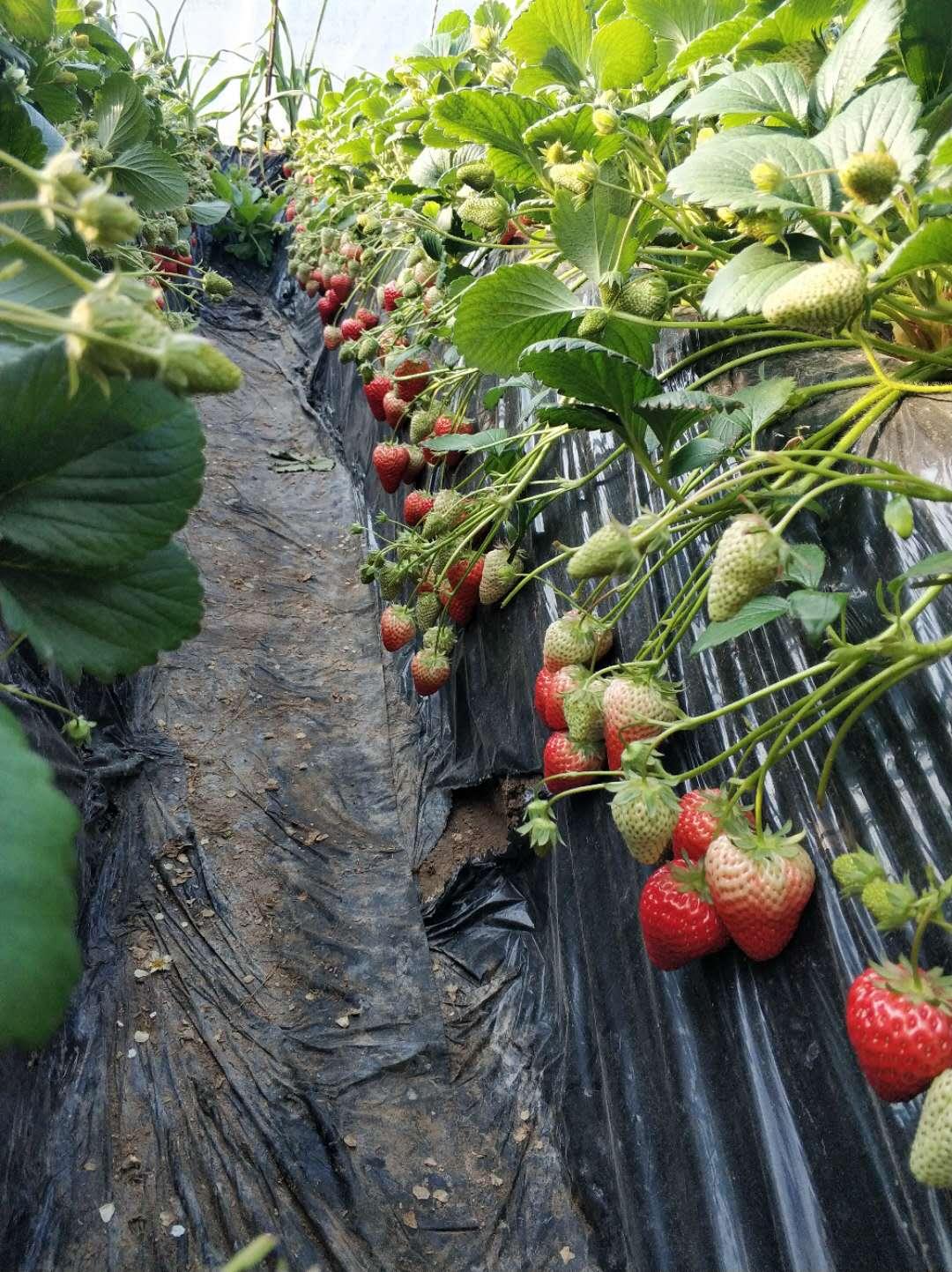 北京农产品供应信息平台助农户销售蔬果400多万公斤图片