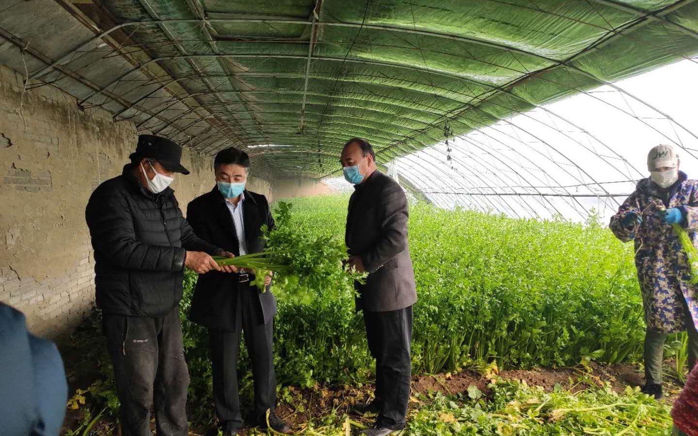 顺义河津营村24万斤芹菜滞销 村委联系批发市场找销路图片