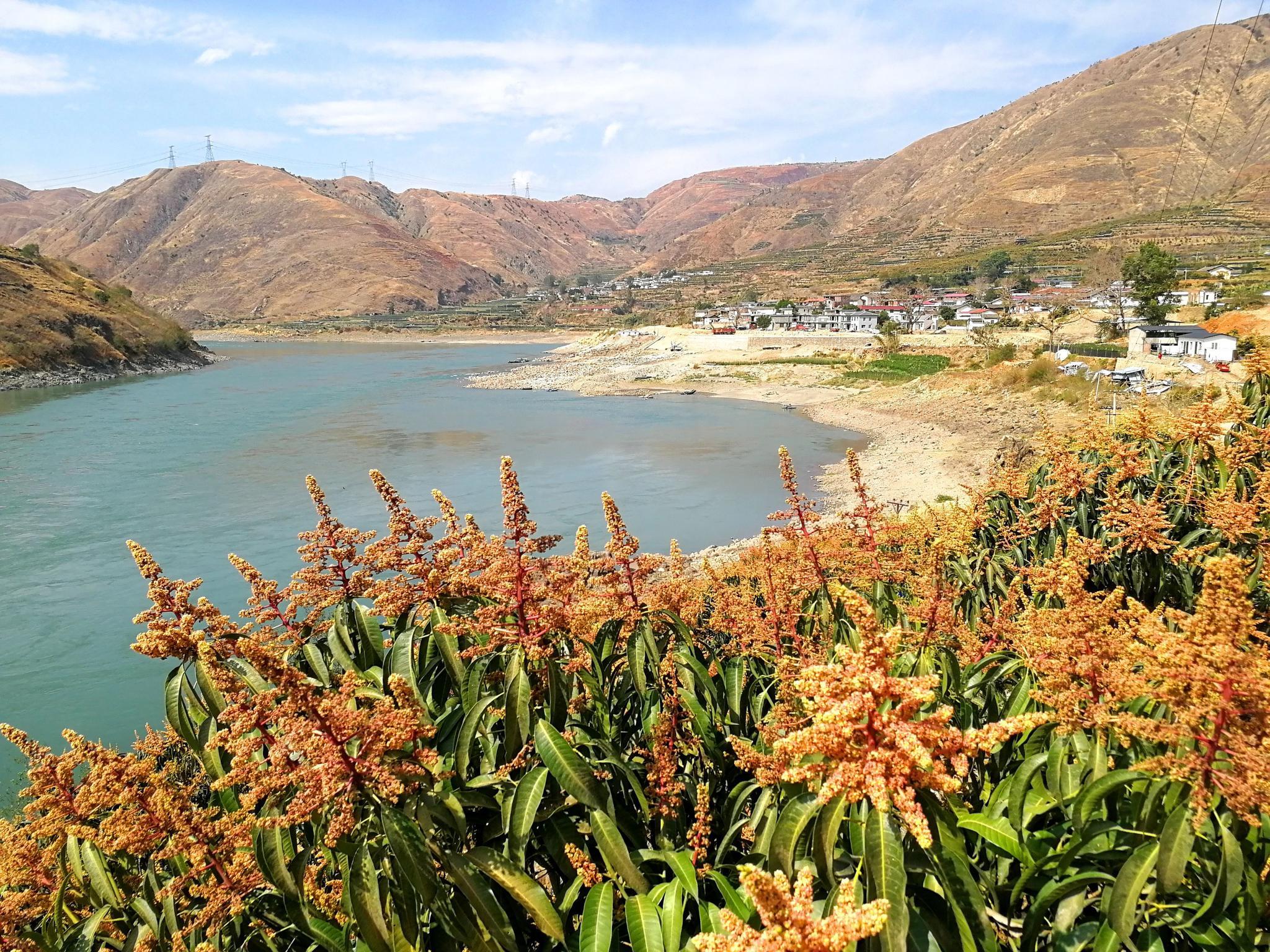 全国多地忙春耕而会理金蓝冠沙江畔在芒果,蓝冠图片