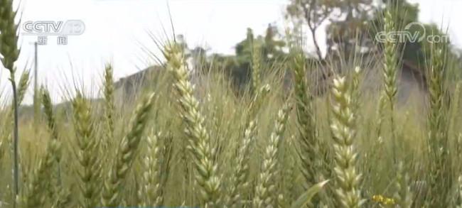 [自然科學]春自然科學耕農資供應質量為重農資向優向圖片