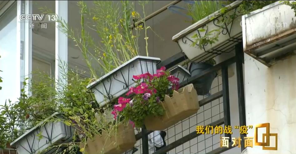 武昌医院院长刘智明走后两个月,他放在阳台上的花都开了图片