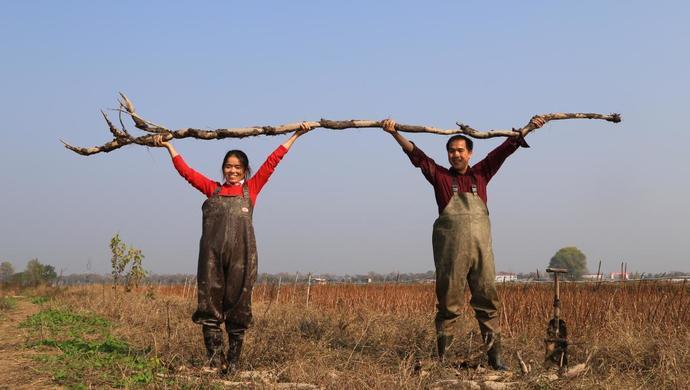 有李佳琦和朱广权加持,市委书记一起带货的洪湖藕,卖得怎么样了图片