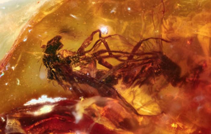 琥珀定格苍蝇交配瞬间  距今约4100万年