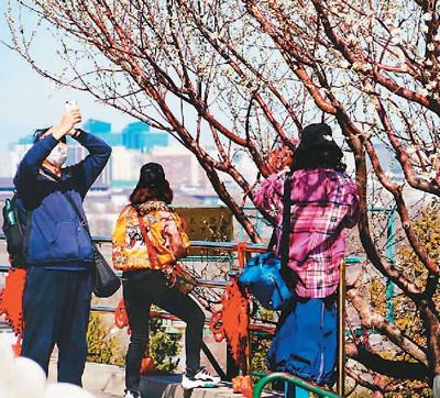 北京公园春意浓