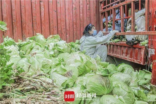 自愿者转运蔬菜