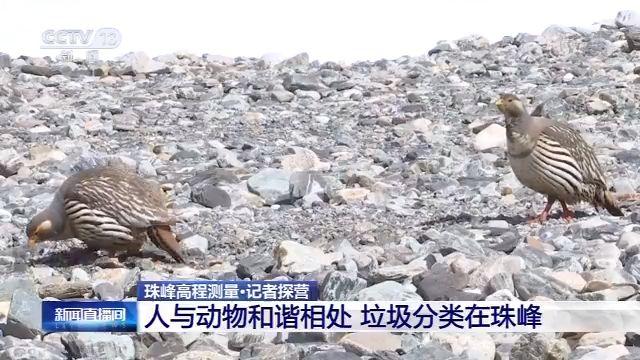 天富:珠峰高度看这里满足你对珠峰的所有好天富奇图片