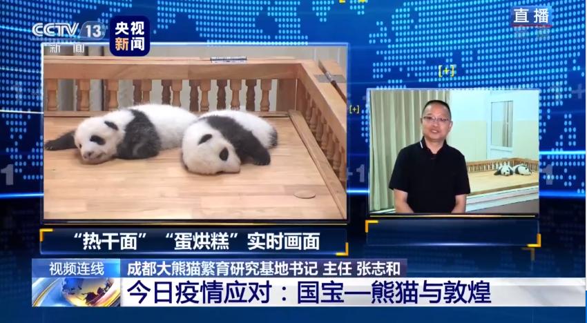 我们的大熊猫都进行了核酸检测?成都大熊猫繁育研究基地回应:是的,全部阴性图片