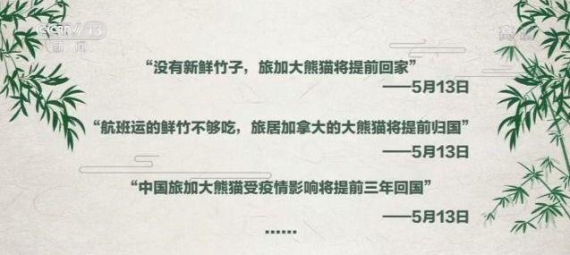 旅加大熊猫提前回国杏悦家里美味的竹子管,杏悦图片