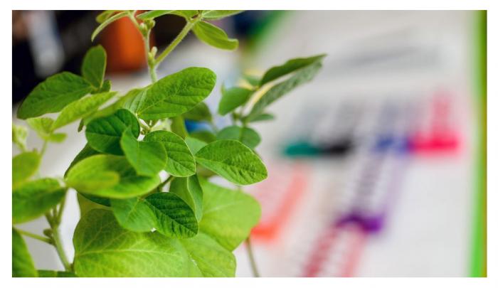 新的CRISPR方法可以编辑作物  但在技术上不会使其成为转基因生物