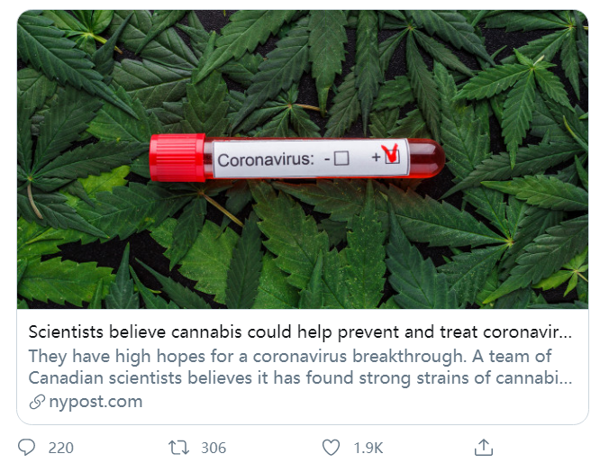 大麻可以预防新冠冕吗?分析师:还是出于商业利益的假新闻| 新皇冠肺炎
