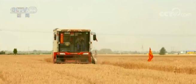 摩登4平台,主摩登4平台产区小麦收获大面积展图片