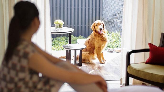 杏悦娱乐:建议推杏悦娱乐动上海打造宠物友好图片