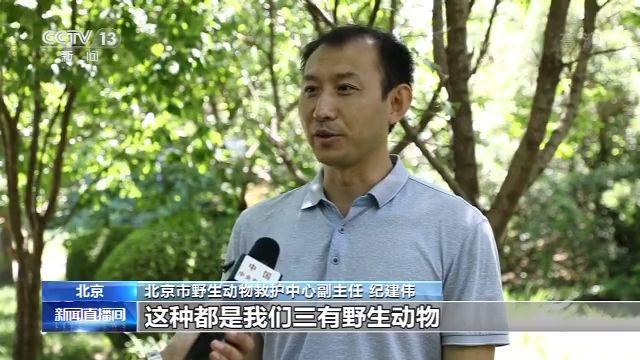"""""""史上最严""""的《北京市野生动物保护管理条例》6月1日正式实施图片"""