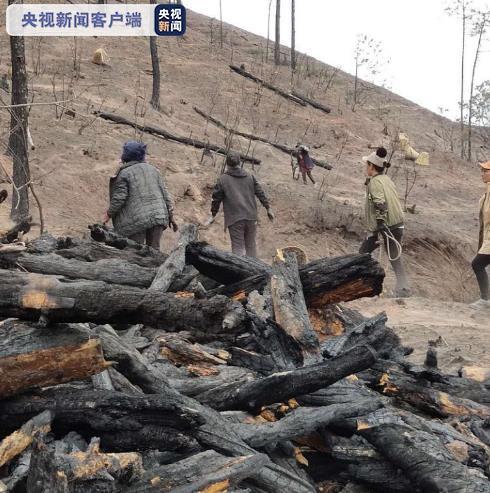 四川西昌经久乡森林火灾 泸山第一阶段枯倒木清理工作完成图片