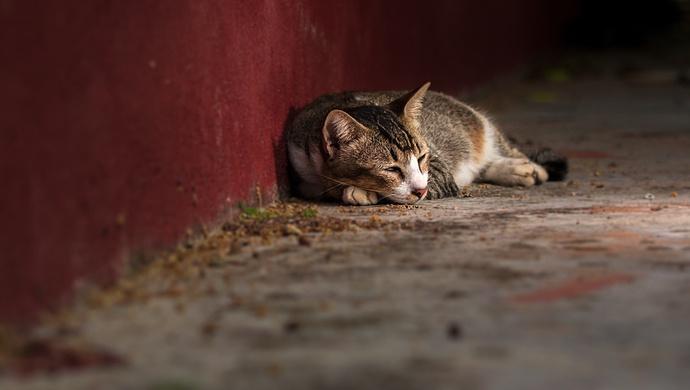 摩天测速一部规摩天测速范养猫的法规承办部门答图片