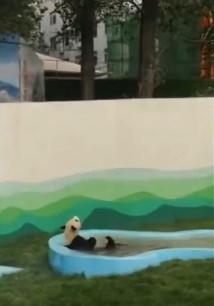 辽宁鞍山:大熊猫入住东北新家 儿童节首次亮相图片