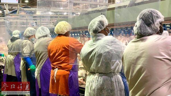 泰森食品公司旗下的肉类加工厂如今用透明帘隔开每个工位图据美联社