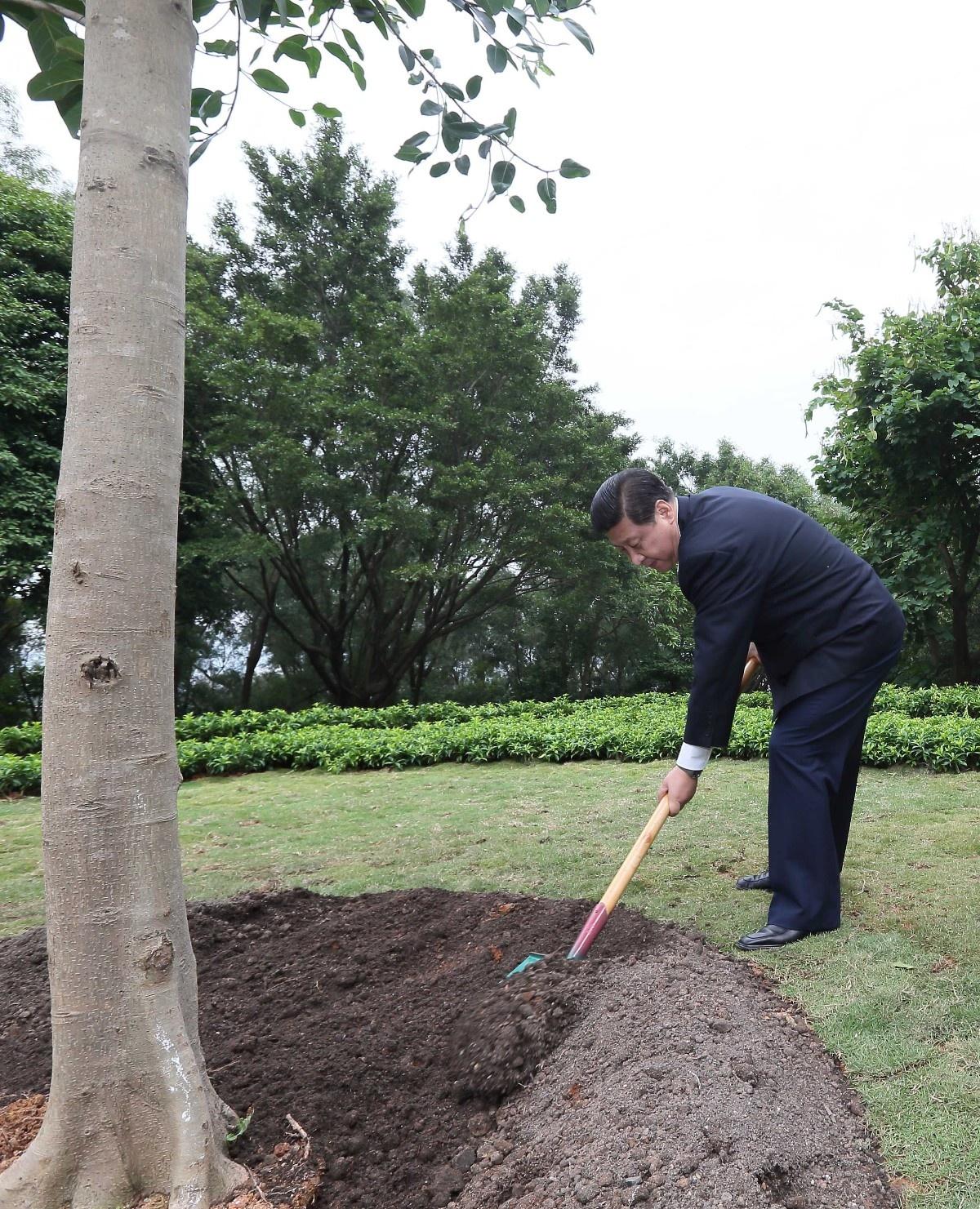 2012年12月7日至11日,习近平在广东省观察事情。这是习近平在深圳莲花山公园种下一棵高山榕树的景象。