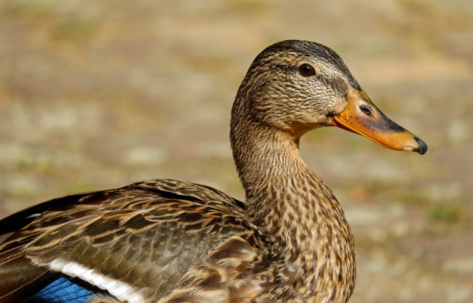煌上煌高管减持套现约375万元 为何不敌绝味鸭脖、周黑鸭?