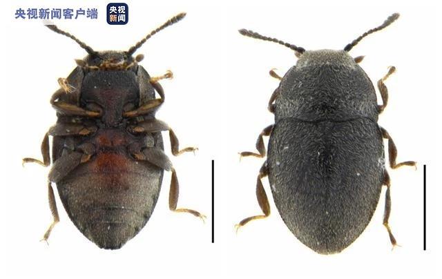 [摩天测速]南摩天测速西沙群岛发现新物种图片