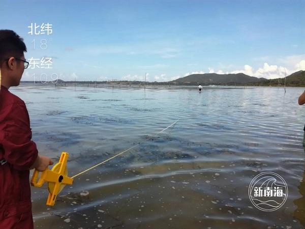 【摩天登录】部摩天登录南海局完成海草床生态系统图片