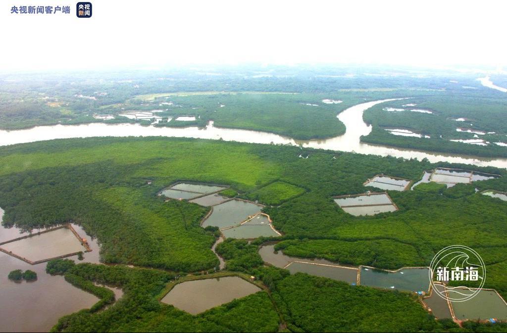 「杏鑫」保护红树林南海人一直杏鑫在行动图片