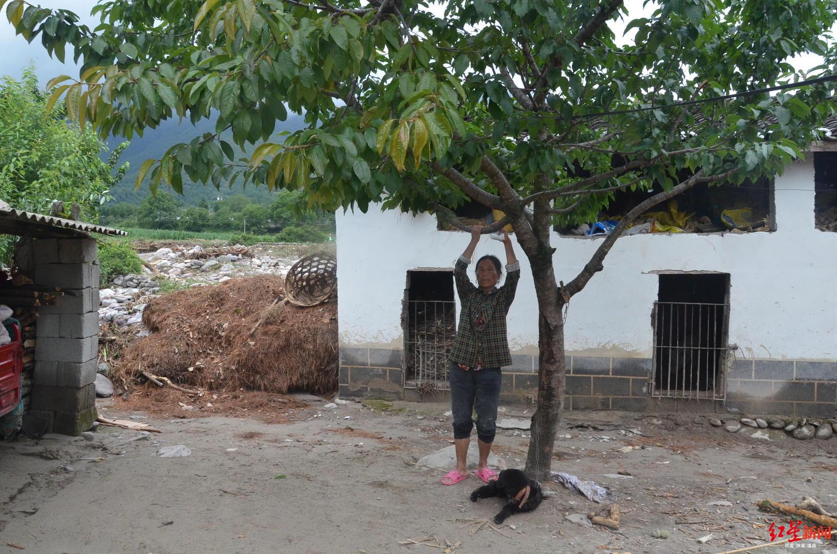 某色莫卡布说其时邻人家小女孩就捉住这颗樱桃树