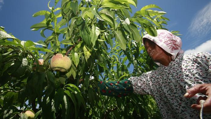 与江苏浙江农村相比,上海乡村产业有哪些叫得响的品牌?上海人大启动专项监督图片
